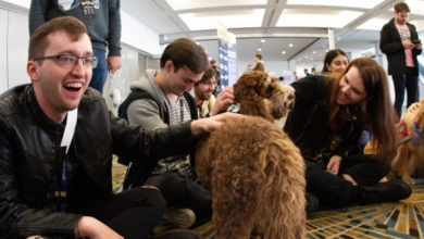 Photo of A Smash Tournament Brought in Therapy Dogs to Help Players Destress