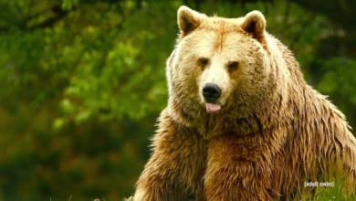 Photo of You Love to See It Episode 5: Unedited Footage of a Bear